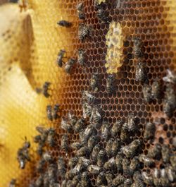 Der Lebenslauf einer Biene